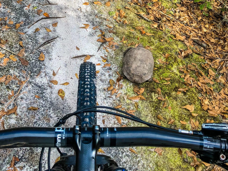 Balm Boyette Scrub MTB Goffer Turtle