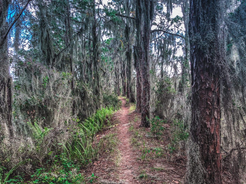 Balm Boyette Scrub MTB Trail