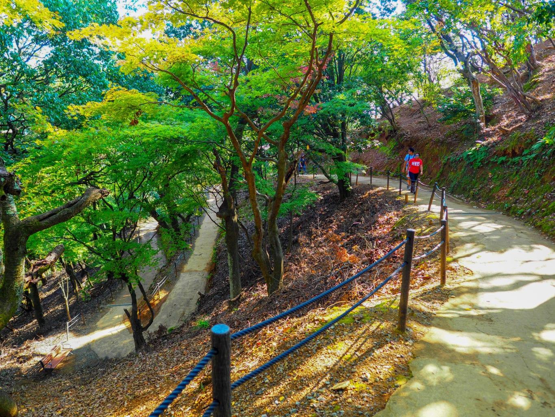 Kyoto Arashiyama Monkey Park Trail