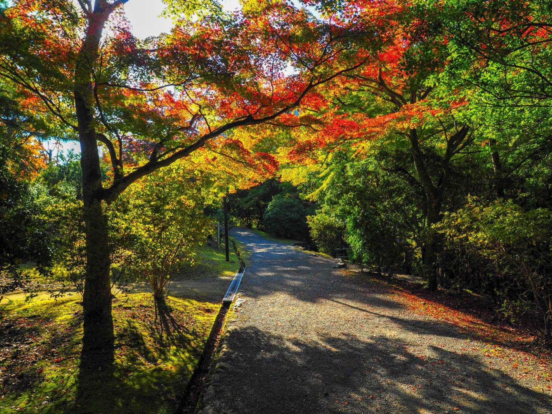 Kyoto Arashiyama Park
