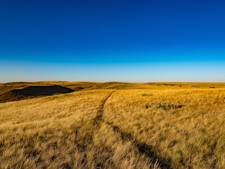 Grasslands National Park Bison Trail
