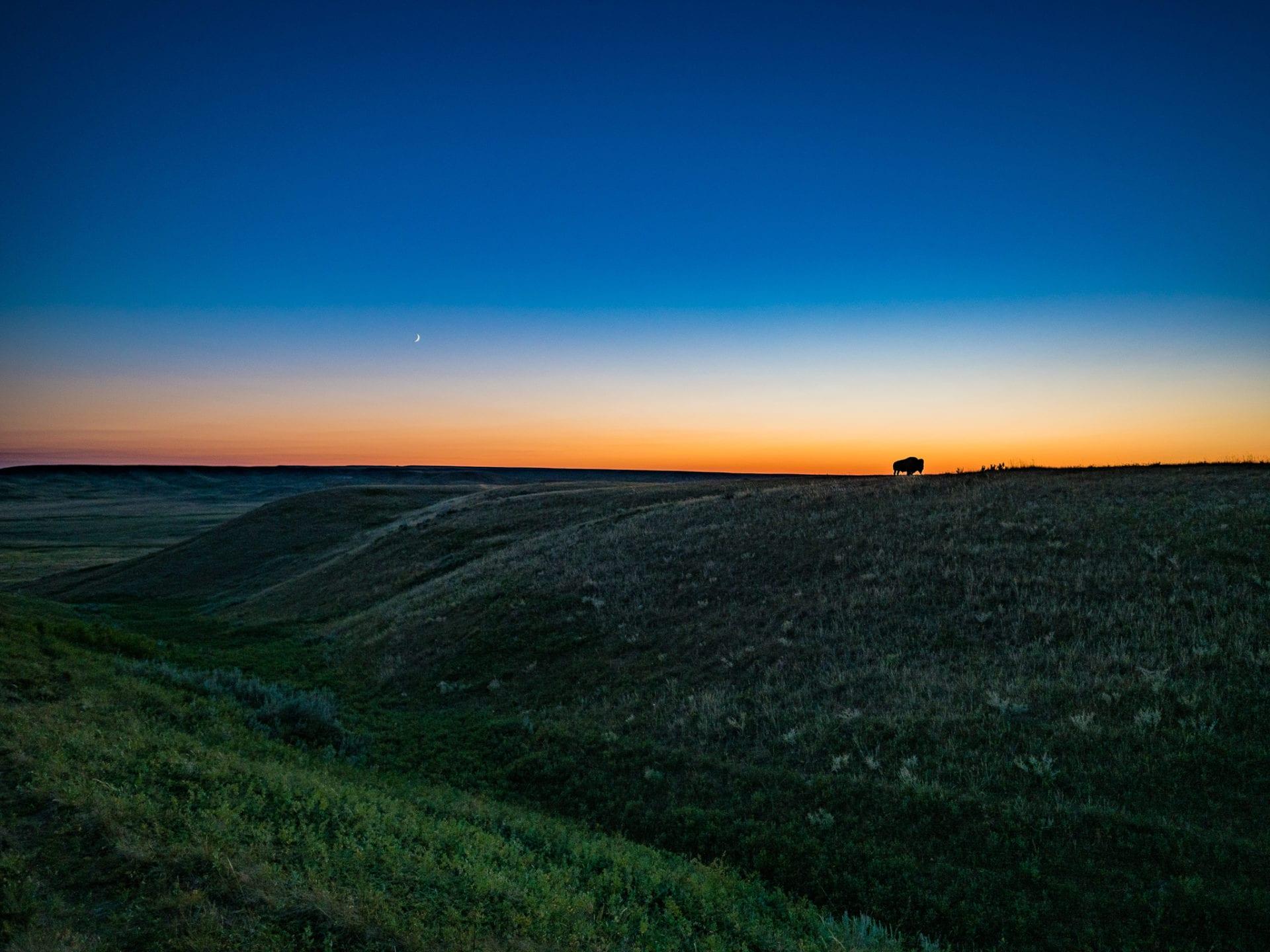 Grasslands National Park Bison Moon Sunset