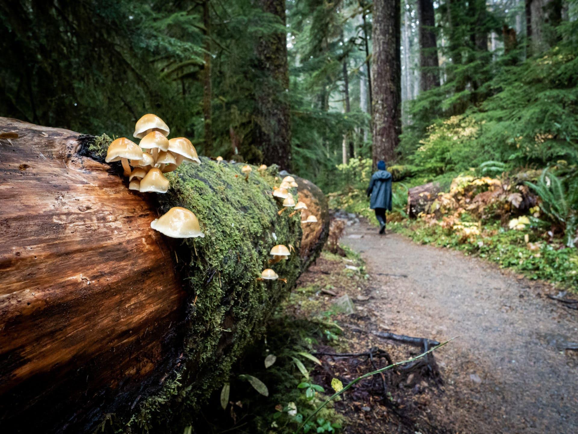 Sol-Duc-Trail-Olympic-National-Park-Mushroom