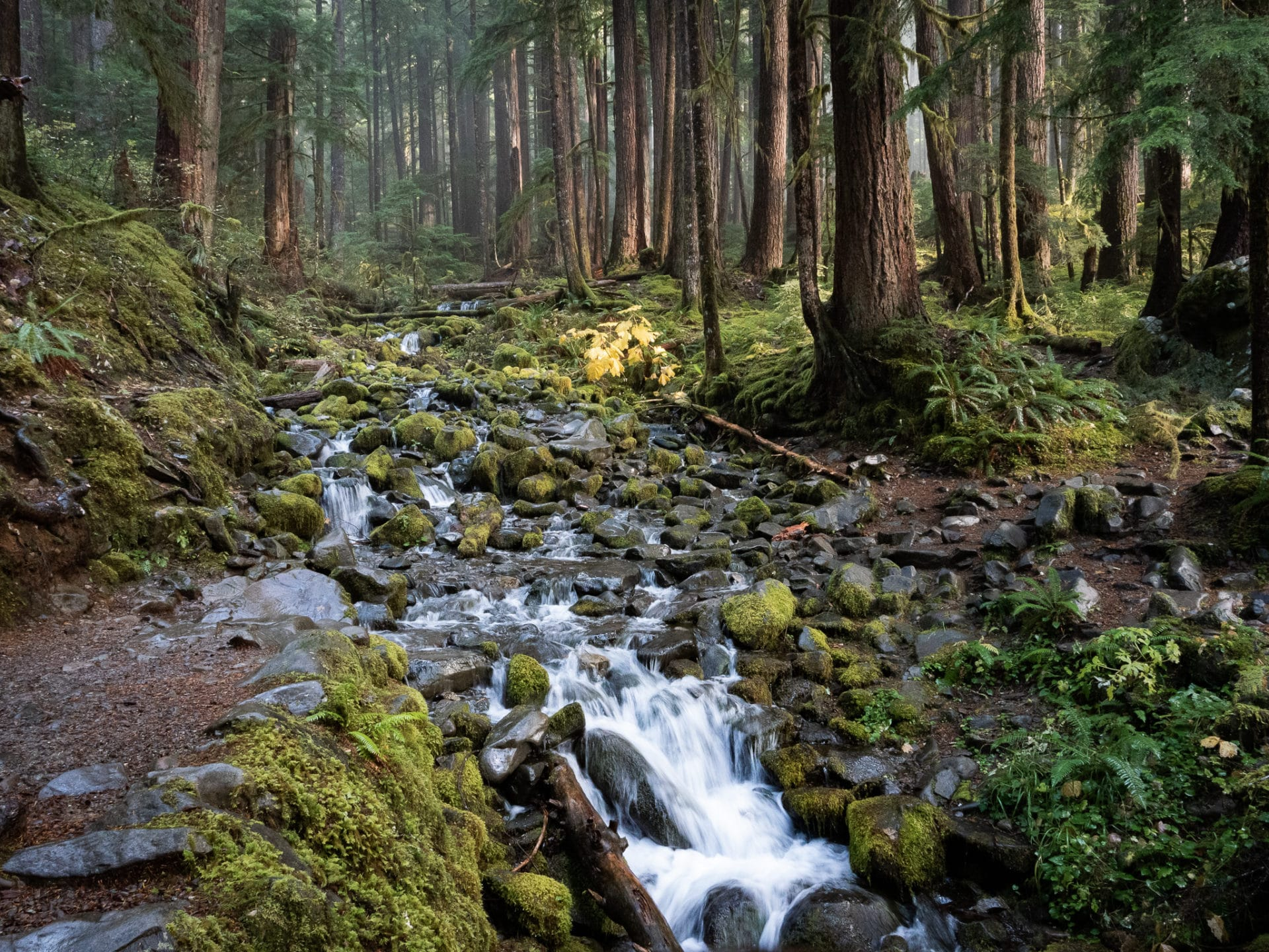 Sol-Duc-Trail-Olympic-National-Park-Stream