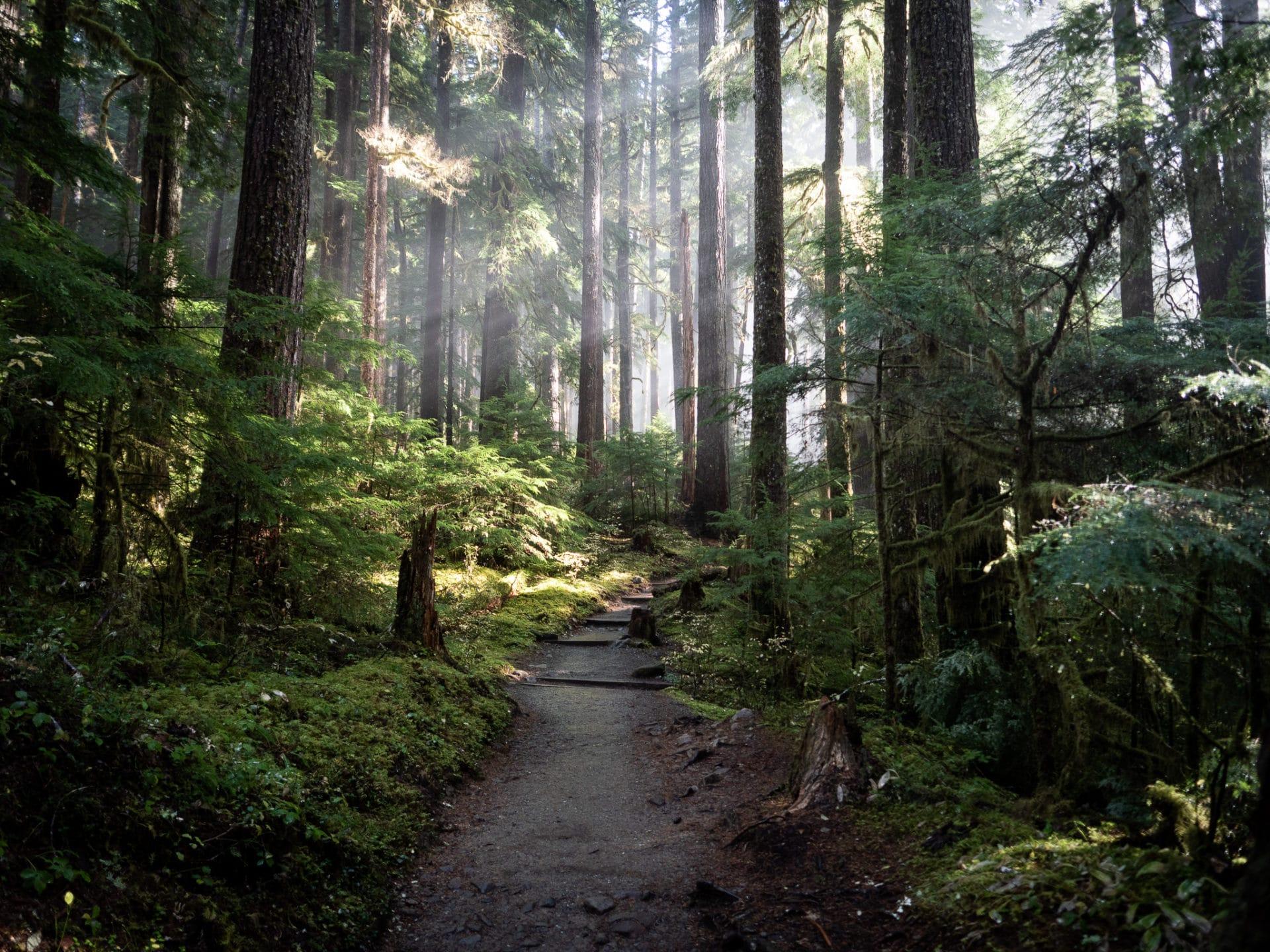 Sol-Duc-Trail-Olympic-National-Park-Sunbeam