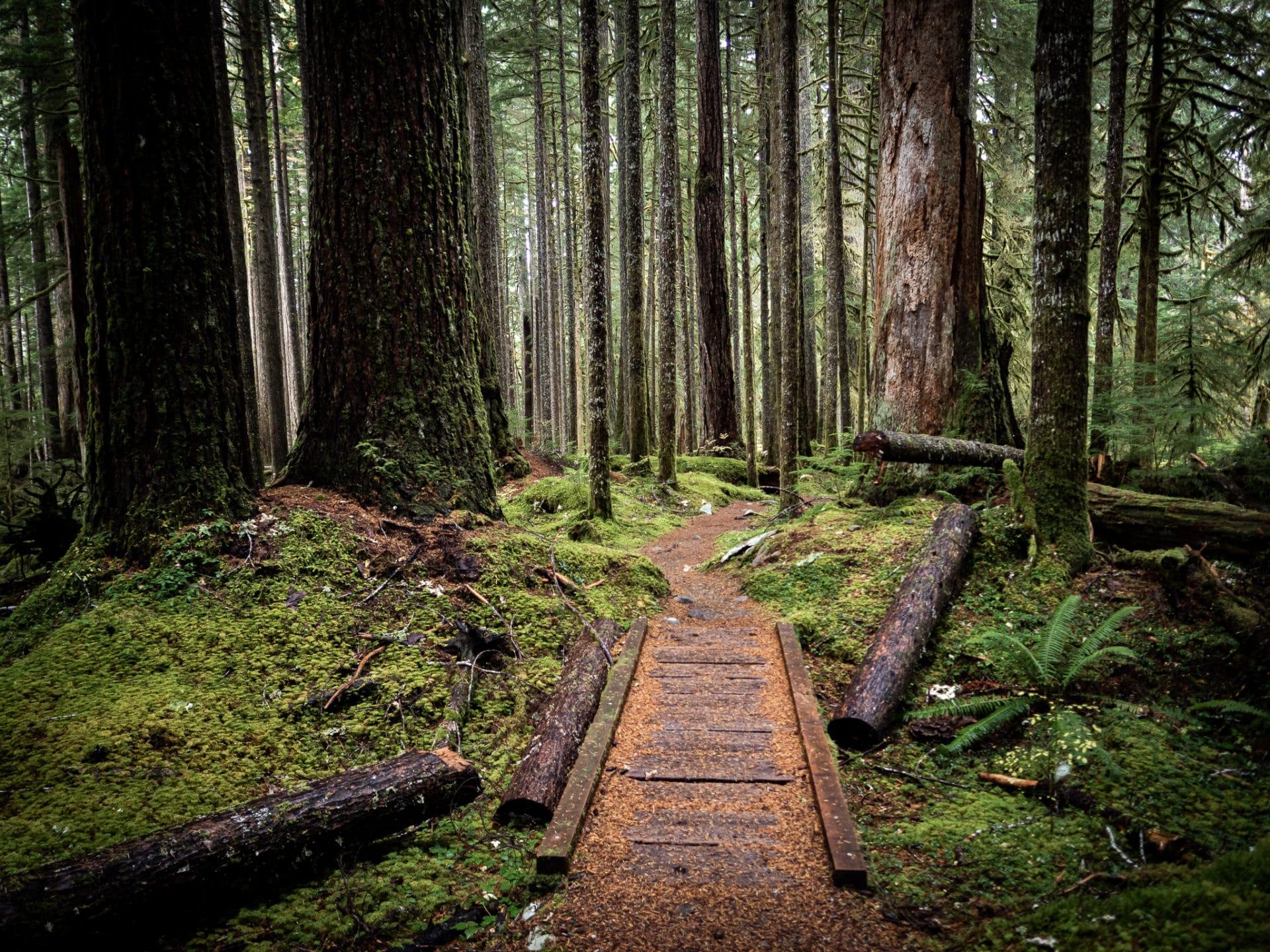 Sol-Duc-Trail-Olympic-National-Park-Tiny-Bridge