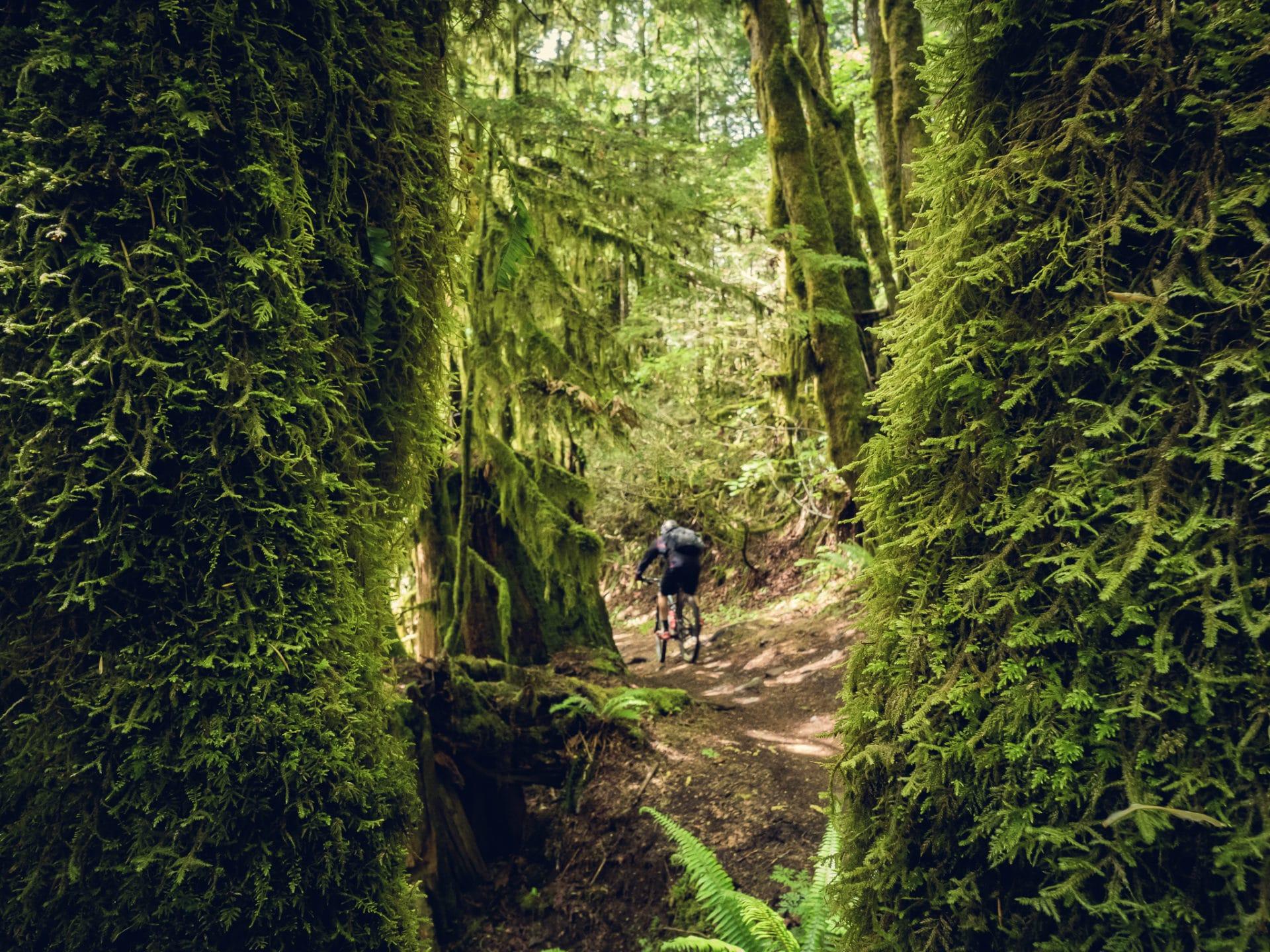 Squamish-Alice-Lake-Crouching-Squirrel-Hidden-Monkey